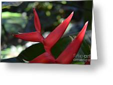 Fuego En La Selva Greeting Card