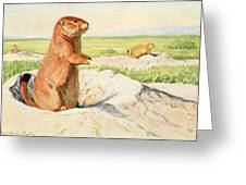 Fuertes, Louis Agassiz 1874-1927 - Burgess Animal Book For Children 1920 Prairie Dog Greeting Card