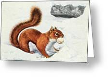 Fuertes, Louis Agassiz 1874-1927 - Burgess Animal Book For Children 1920 Red Squirrel Greeting Card