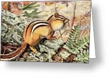 Fuertes, Louis Agassiz 1874-1927 - Burgess Animal Book For Children 1920 Striped Chipmunk Greeting Card