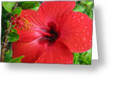 Full Bloom In Red Greeting Card