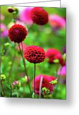 Full Bloom Reds Greeting Card