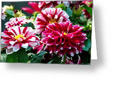 Full Blooms Greeting Card