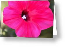 Full In Bloom Greeting Card