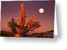 Full Moon Behind Ancient Bristlecone Pine White Mountains California Greeting Card