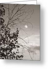 Full Moon Behind Cottonwood Tree Greeting Card