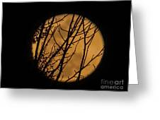Full Moon Through The Branches Greeting Card