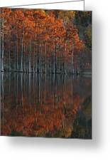 Full Of Glory - Cypress Trees In Autumn Greeting Card