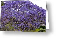 Full On Purple Greeting Card