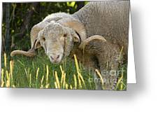 Full Turn Ram Greeting Card