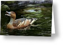 Fulvous Whistling Duck 2 Greeting Card