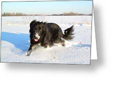 Fun In The Snow Running Greeting Card