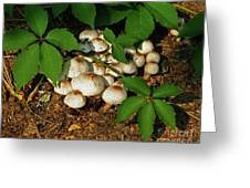 Fungal Appeal Greeting Card