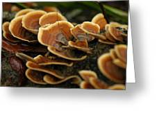Fungal Beauty Greeting Card