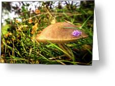 Funghi, Cashel Forest Greeting Card