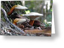 Fungi 1 Greeting Card