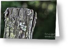 Fungi Green Greeting Card