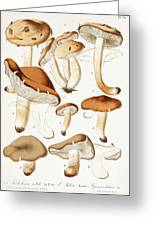 Fungi Greeting Card