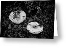 Fungi No 3 Bw Greeting Card
