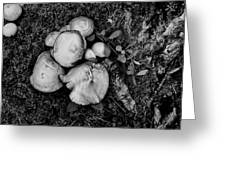 Fungi No 4 Bw Greeting Card