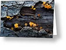 Fungi On Log Greeting Card