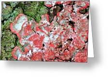 Fungus Amongst Us - Florida Palm Greeting Card