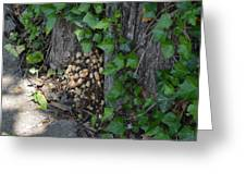 Fungus At Base Of Tree Greeting Card