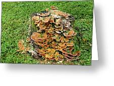 Fungus Bouquet Greeting Card
