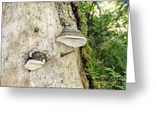 Fungus Grows On A Tree Trunk Greeting Card