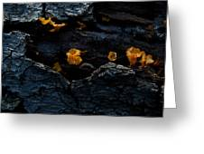 Fungus On Log Greeting Card
