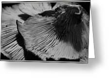 Fungus Two Greeting Card