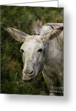 Funky Donkey Greeting Card