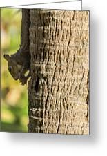 Funky Ear Squirrel Greeting Card