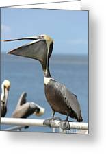 Funny Brown Pelican Greeting Card