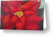 Funny Poinsettia Greeting Card