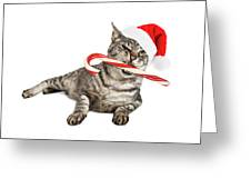 Funny Santa Cat With Candy Cane Greeting Card