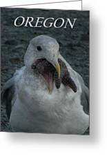 Funny Seagull With Starfish Greeting Card