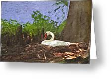 Furman University Swan Greeting Card