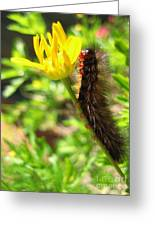 Furry Caterpillar On A Yellow Flower Greeting Card