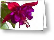 Fuschia Blossom Macro  Greeting Card