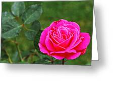 Fuschia Rose Greeting Card