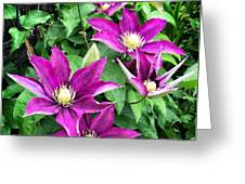 Fushia Clematis Flowers Greeting Card