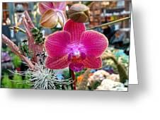 Fushia Orchid Greeting Card