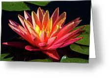 Fushia Waterlily 1 Greeting Card