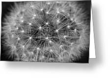 Fuzzy - Black And White Greeting Card