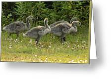Fuzzy Fowlings Greeting Card