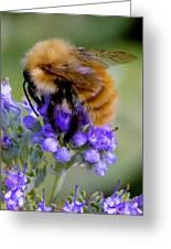Fuzzy Honey Bee Greeting Card