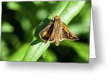 Fuzzy Moth Greeting Card