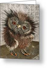 Fuzzy Owl Greeting Card