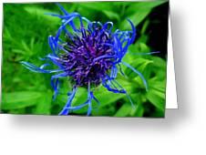 Fuzzy Purple Flower Greeting Card